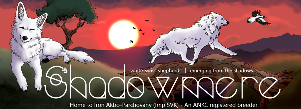 Shadowmere White Swiss Shepherds